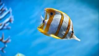바닷속 물고기(Fish)와 신비한 수중풍경에 대한 이미지 검색결과