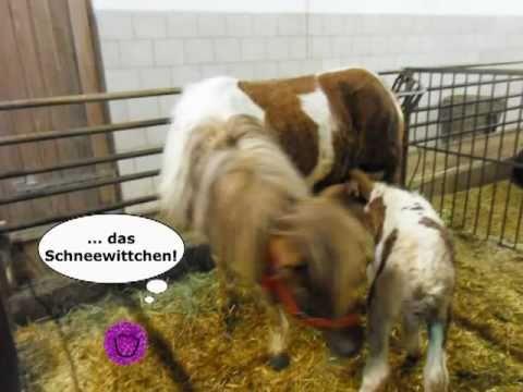 Tierkinder am Zittrauerhof