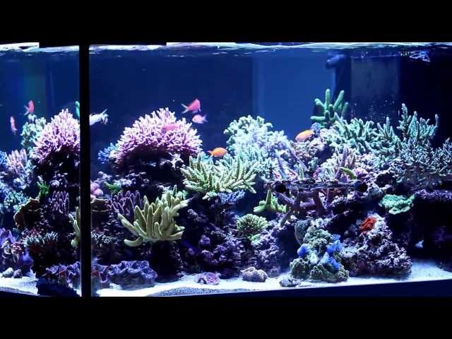 Scott and Tammy's 4X4 SPS reef tank!