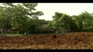 preview picture of video 'Control de la mosca de establo en el cultivo de piña.'