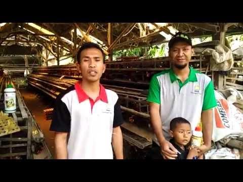 Video Cara Sukses Ternak Ayam Petelur Pemula 082137665887 - 581D877B
