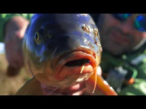 Pesca de carpas en Junin