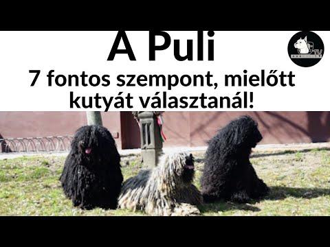 Papillomavírus életciklusa