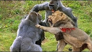 LIVE: Best Attacks Of Wild Animals 2017 - Top Craziest Wild Animal Fights Caught On Camera
