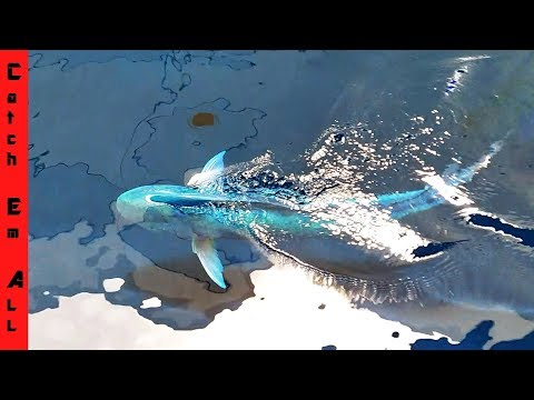 MYSTICAL 60LB+ FISH in Giant POOL POND AQUARIUM (Frost)
