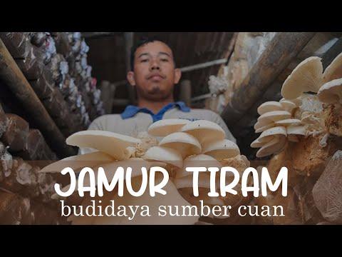 Video UMKM : Berbisnis budidaya Jamur Tiram