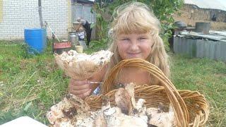 Поездка  за  грибами
