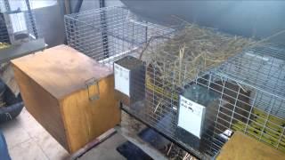 Смотреть онлайн Чем не стоит кормить кроликов