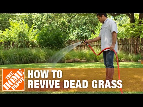 , title : 'How to Grow Grass with Dead Grass Spots | The Home Depot