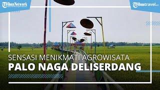 Mengunjungi Agrowisata Palo Naga, Hamparan Sawah Terdapat Makanan Tradisional Khas Indonesia