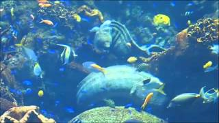 2015-04-28 Osaka Aquarium