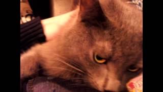 добрый котяра