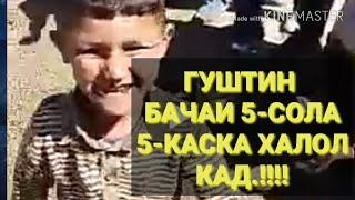 ГУШТИН. БАЧАИ 5-СОЛА 5-КАСА ХАЛОЛ КАРД РЕКОРД..!