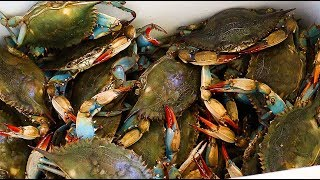 How to Boil Blue Crabs
