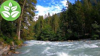 اغاني حصرية Stormy Forest Mountain River. (10 hours) Nature Sounds (White Noise for sleep) تحميل MP3