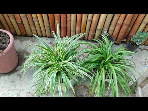 Gardening Basics | Fertilizer | Godi | Season of Plant | Detail Described
