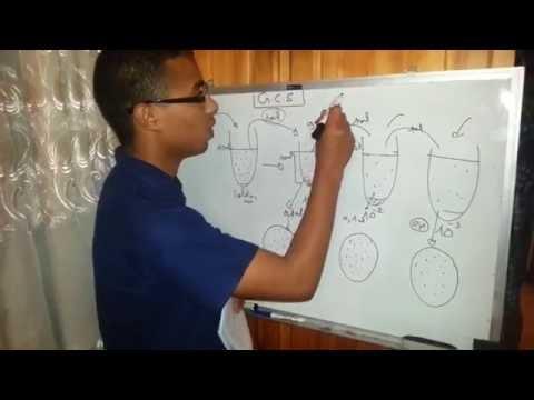 Les aspects des microorganismes végétaux des ongles et le pied