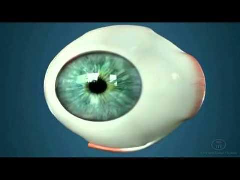Тауфон поможет от глазного давления