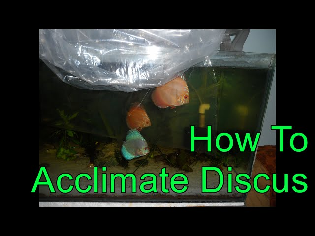 28. Tips on How To Acclimate Discus to reduce Stress