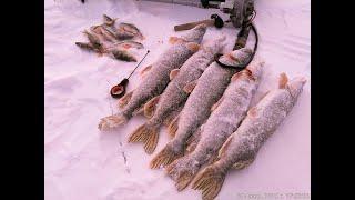 Отчеты о рыбалки алтайский край
