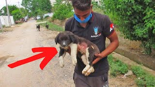 Hiker Stumbles Upon Injured Dog And Makes A Tough Decision by Did You Know Animals?