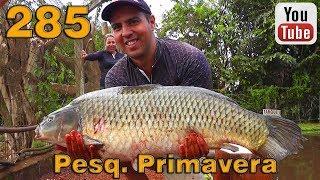 Programa Fishingtur na TV 285 - Pesqueiro Primavera