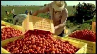 """""""Dai campi delle nostre cooperative"""": Pomodoro"""