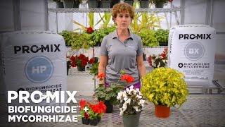 PRO-MIX BIOFUNGICIDE + MYCORRHIZAE