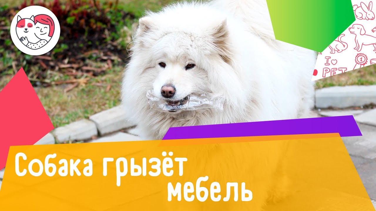 4 способа отучить собаку грызть мебель