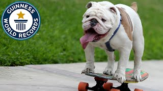 Gambar cover Otto the skateboarding bulldog - Guinness World Records