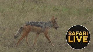 safariLIVE - Sunset Safari - August 6, 2018 (Part 2)