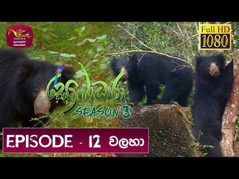 Sobadhara Rupavahini | 2019-06-07 | Bear | වලහා