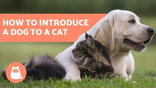 How To Introduce A Dog To A Cat   In 5 Easy Steps!