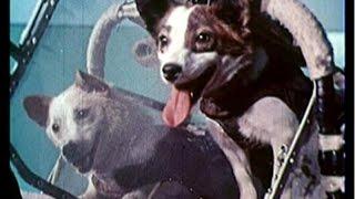 Смотреть онлайн Самые известные животные побывавшие в космосе