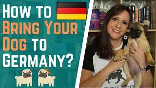 How to Bring Your Dog to Germany   American in Germany