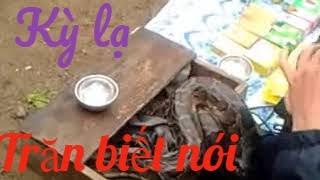 Kỳ Lạ Trăn Biết Nói Ở Miền Trung&Strange python speak in Vietnam