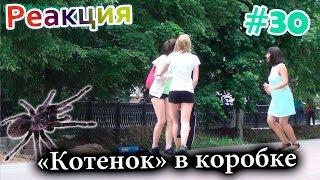 """Котенок"" в Коробке / Meowing Spider Prank (Реакция 30)"