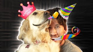 HAPPY BIRTHDAY CHICA!! My baby girl is turning 3 years old today and I'm so grateful to have her in my life! Click READ MORE to see more awesome Chica videos! Subscribe Today! ► http://bit.ly/Markiplier  BOAT DOG ► https://youtu.be/WLIfbiTUMiU  CHEF DOG ► https://youtu.be/Qnf_1laqE9I  CHICA HAD SURGERY ► https://youtu.be/YfX0-8tTXOc  PHOTOBOOTH WITH CHICA ► https://youtu.be/7PPr8apngqQ  CHICA'S FIRST VIDEO ► https://youtu.be/9hI84Qneg2M  chica chases a light because she is a good girl ► https://youtu.be/60Up3zxublY  Check Out My WEBSITE!! ► https://markiplier.com/  Awesome Games Playlist ► https://www.youtube.com/playlist?list=PL3tRBEVW0hiDAf0LeFLFH8S83JWBjvtqE  Scary Games Playlist ► https://www.youtube.com/playlist?list=PL3tRBEVW0hiBSFOFhTC5wt75P2BES0rAo  Follow my Instagram ► http://instagram.com/markipliergram Follow me on Twitter ► https://twitter.com/markiplier Like me on Facebook ► https://www.facebook.com/markiplier Join us on Reddit! ► https://www.reddit.com/r/Markiplier/  Horror Outro ► https://soundcloud.com/shurkofficial/haunted Happy Outro ► https://soundcloud.com/hielia/minimusicman-crazy-la-paint