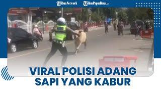 Viral Video Polisi Adang Sapi Kurban yang Kabur ke Jalan Raya saat Hendak Disembelih