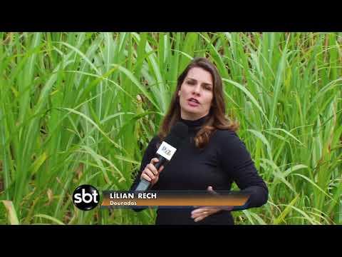 Transformação do bagaço de cana em biomassa