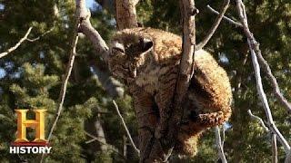 Mountain Men: Rich Gets Rid of a Bobcat (Season 4, Episode 11) | History