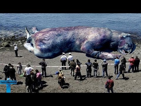 Top 10 Strangest Things To Wash Up On Shore -  Bizarre Things That Washed Up on Beaches