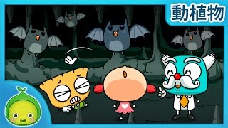 子供の理科「動植物」 洞窟の中は真っ暗 【まめきゅん】  子供向け動物 動物の名前 子供向け知育動画  植物を育  子供向け科学