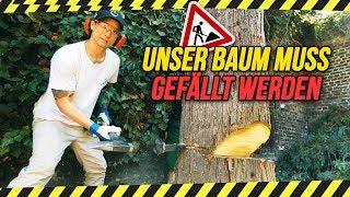 VORSICHT BAUM FÄLLT! ... leider (Achtung, sehr männliches Video)