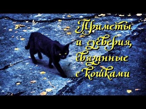 Приметы и суеверия связанные с кошками