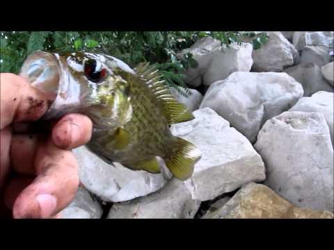 Fishing at Gallup Park and Barton Pond