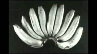 Video S.L.O.N.