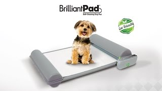 BrilliantPad - World's First Self-Cleaning Indoor Dog Potty