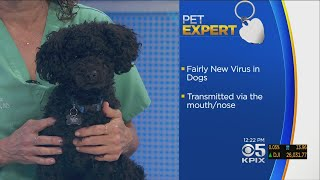 PET EXPERT: Dr. Jill Chase Talks About Canine Influenza