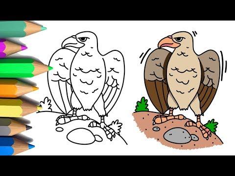 740+ Gambar Burung Elang Untuk Anak Tk HD Terbaik